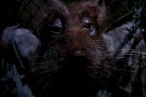 Черепашки ниндзя - Сплинтер в плену у Шредера