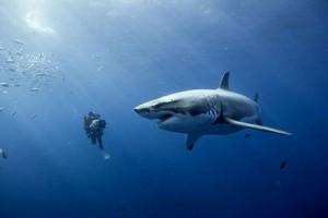 обзор фильма Океаны