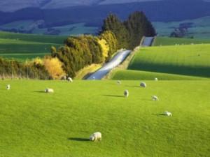 новозеландский пейзаж
