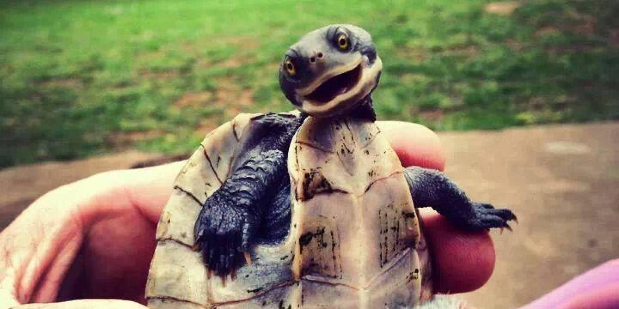 Про, прикольные картинки про черепаху
