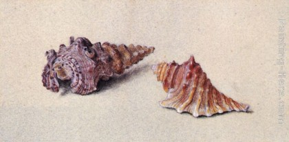 Study of Two Shells