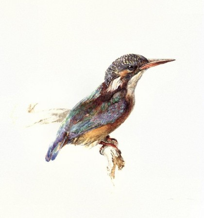 jrnas_008_john-ruskin_kingfisher_c_1870-1-Scan_by_JmJ