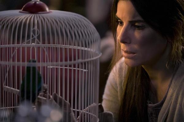 Сандра Буллок с завязанными глазами, детьми и птичьим коробом